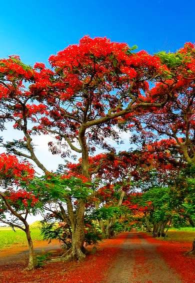 The Most Representative Trees Of The Beauty Of Venezuela Ascribur